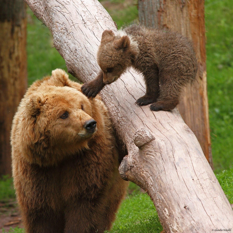 Kleine Bären